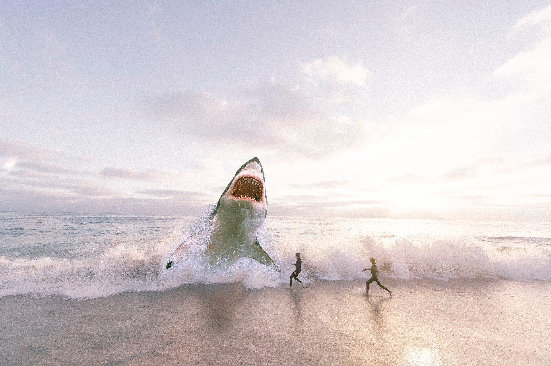 shark-3004153_1920
