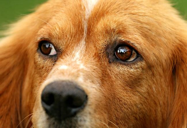 dog-1530644_1920