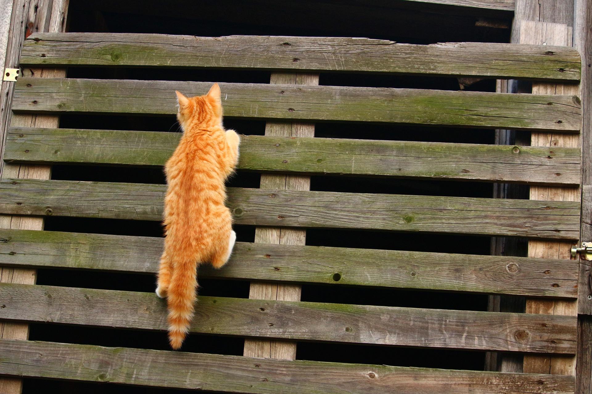 cat-1134615_1920